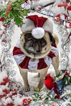 Pug Christmas Card - Free image #406199