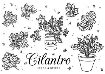 Cilantro Sketch Vector - Kostenloses vector #408159