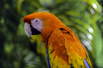 Stunning Macaw - Kostenloses image #409179