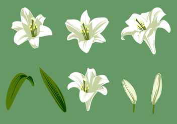 Easter Lily Free Vector - vector #410459 gratis