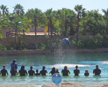 Bahamas (Paradise Island) Dolphin Cay offers playing with playful bottlenose dolphines - бесплатный image #411359