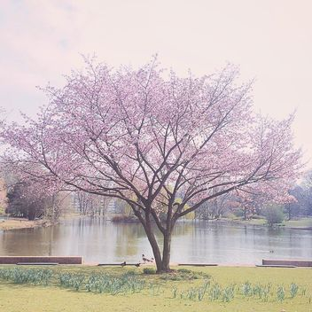 park, spring, tree - Free image #411879