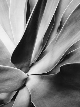 floral, flora - Free image #411929