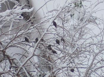 Turkey (Istanbul) Poor birds!! - Free image #413139