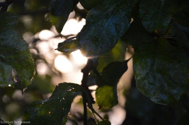 Natural light play - image gratuit #413299