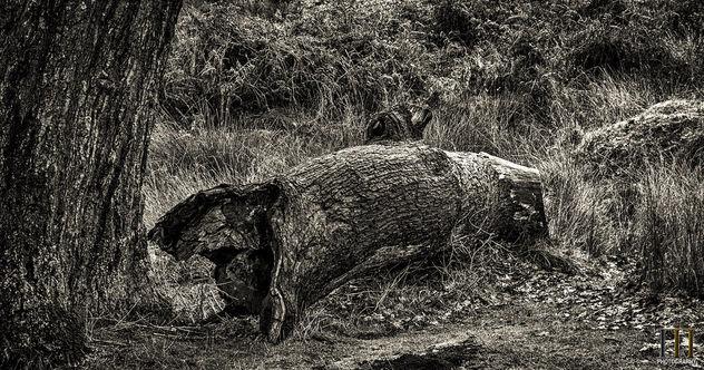 The Fallen! - image gratuit #413399