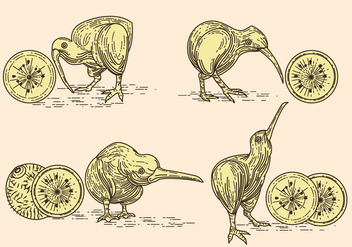 Vector Image of Nice Kiwi Birds and Kiwi Fruits - бесплатный vector #414439