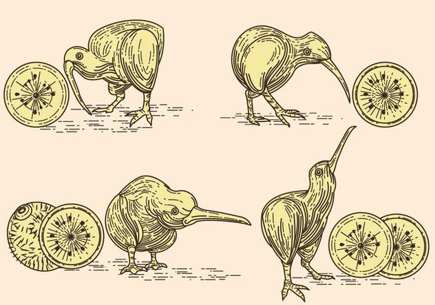 Vector Image of Nice Kiwi Birds and Kiwi Fruits - Kostenloses vector #414439