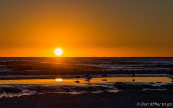 Florida Gold - бесплатный image #415249