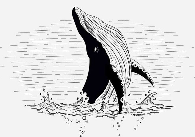 Free Vector Whale Illustration - Free vector #419029