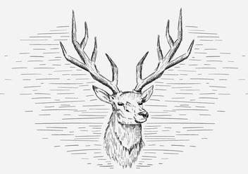 Free Vector Deer Illustration - Free vector #419039