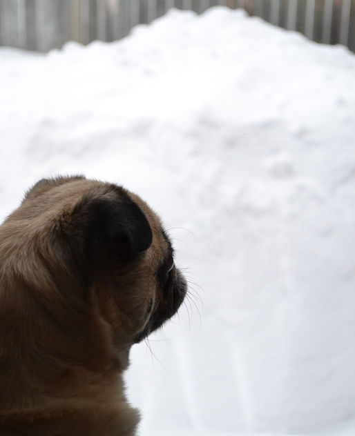 Please Stop Snowing! I Want To Go Play! - image gratuit #420839
