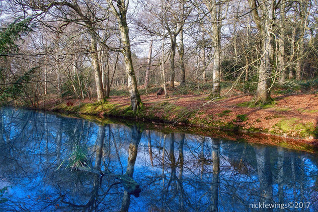 Reflection of Trees - image gratuit #421229