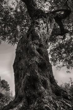 El tronco - image gratuit #422599