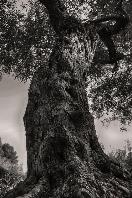 El tronco - image #422599 gratis