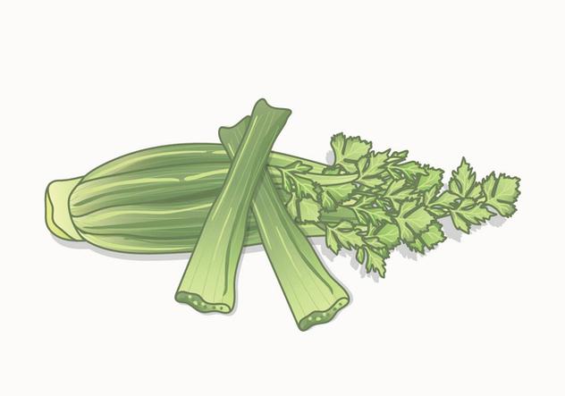 Celery Vector - vector #422669 gratis