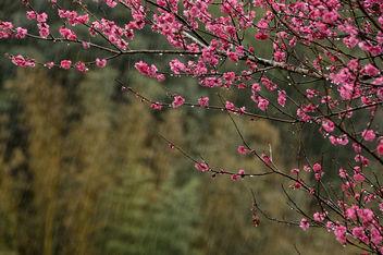 Spring rain - Free image #425569