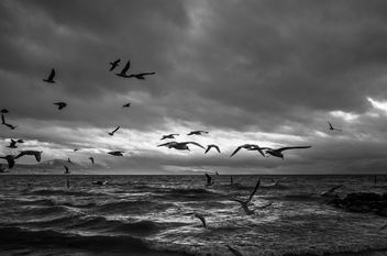 Birds - Free image #426019