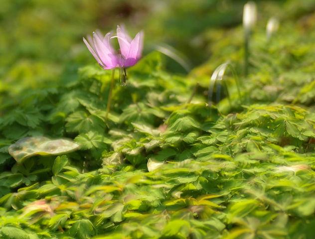Light of spring - image #427529 gratis