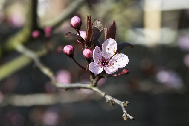 Present the spring - image #427909 gratis