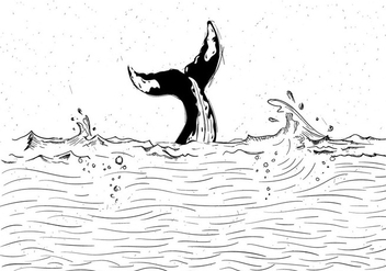 Free Whale Vector Illustration - Free vector #428199