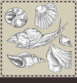 snail and shells in vintage style illustration - бесплатный vector #135179