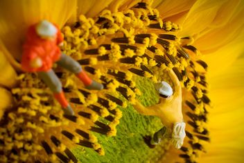 Miniature climbers on sunflower - image #136369 gratis