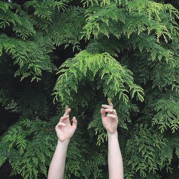 Hands and green tree - Free image #136559