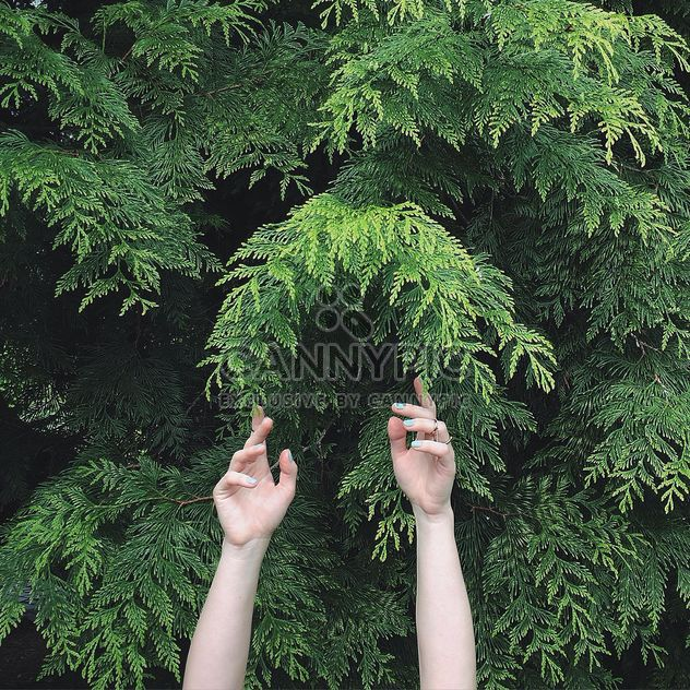 Hands and green tree - image #136559 gratis