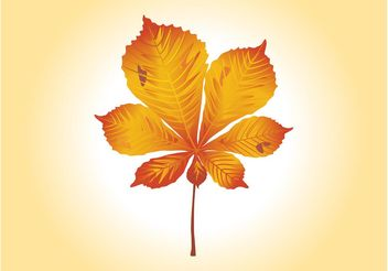 Autumn Leaf Vector Graphics - Free vector #145719