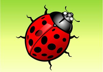 Lady Bug Cartoon - vector gratuit #146329