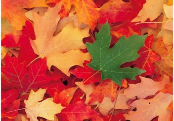 Autumn Foliage - Free vector #146339
