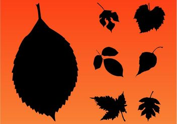 Autumn Leaves - Free vector #146369