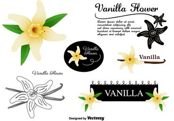 Vanilla Flower Vectors Set - Free vector #146719