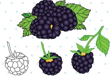 Black Berry Fruit Vector - vector gratuit #146969