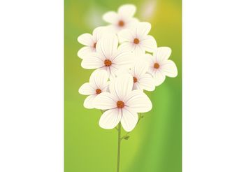 White Flowers Vector - vector #153269 gratis