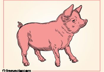 Pig - Free vector #157129