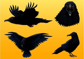 Crow Graphics Set - vector #157779 gratis