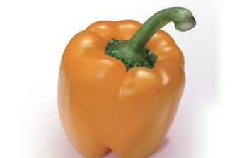 Orange Pepper - Kostenloses vector #169249