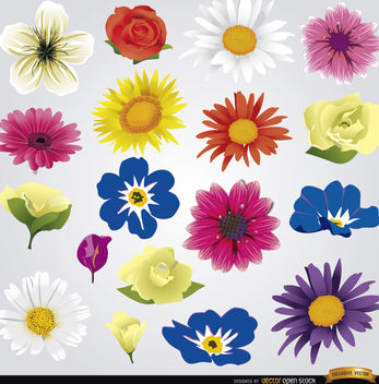 18 species of flowers - vector #171539 gratis