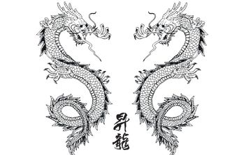 Vector Japanese Dragon - vector gratuit #174579