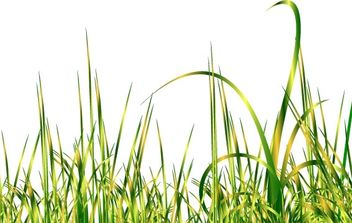 Green grass - vector gratuit #176209