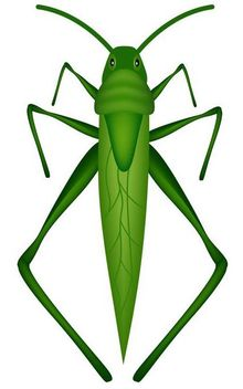 Green Grasshopper Insect - vector gratuit #181299