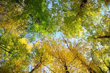 Colored autumn trees - image #182899 gratis