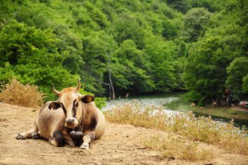 Ox on shore of lake - image #183049 gratis
