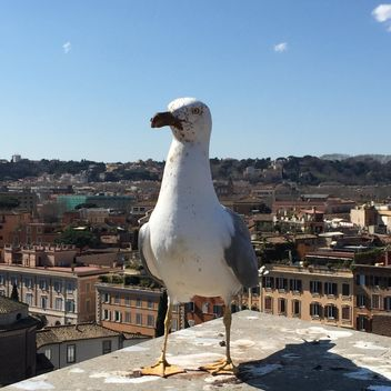 Seagull standing on roof of building - image #183119 gratis