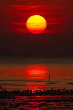 Red sunset - image gratuit #183509