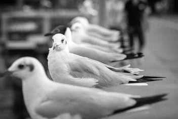 Seagulls sitting on parapet - image #183539 gratis