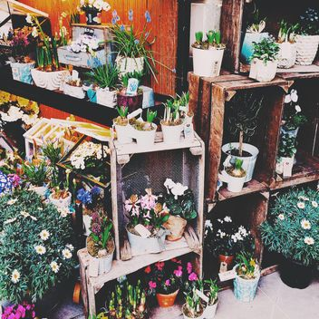 Houseplants in pots on shelves - image #184049 gratis