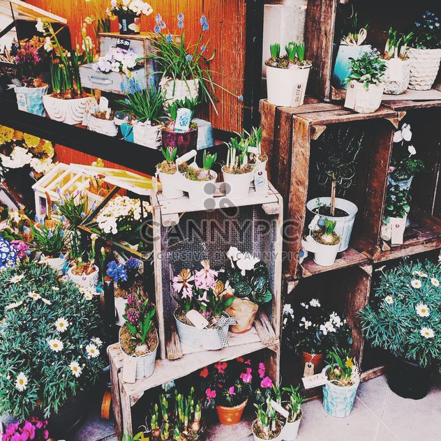 Houseplants in pots on shelves - image gratuit #184049